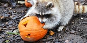 Halloween au zoo